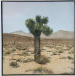 fren nabuurs joshua tree death valley oil painting