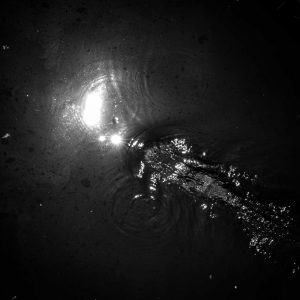 alligator fren nabuurs zwart wit black and white photo