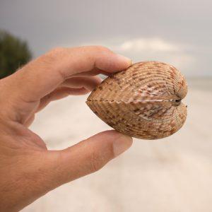 fren nabuurs shell